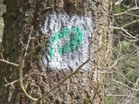 Markierung Bachpfad