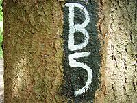Markierung Bödefelder Hollenpfad