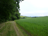 Extratour Wald-Brand