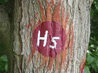 Markierung H5 Niedenstein – Im Banne der Chatten