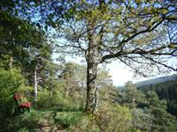 Kappleifelsen-Tour