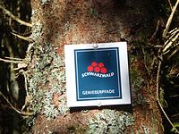 Markierung Mummelsee-Hornisgrindepfad