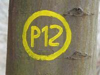 Markierung Mainzer Köpfe P12