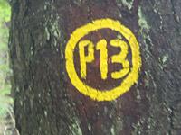 Markierung Boyneburg P13