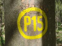 Markierung Graburg P15
