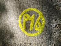 Markierung Asbach-Sickenberg P16