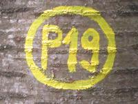 Markierung Gänsekerleweg P19