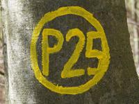 Markierung Kleinalmerode P25