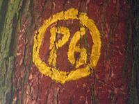 Markierung Heldrastein P6