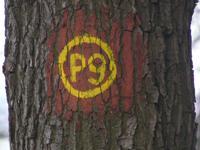 Markierung Wacholderpfad Roßbach P9