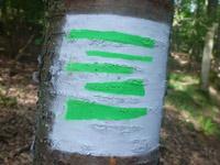 Markierung Saar-Riesling-Steig