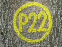 Markierung Sankt Ottilien P22