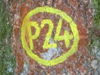 Markierung Söhrewald P24