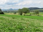 Albertine-Steig