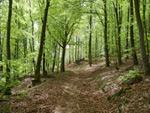 Extratour Eschenburgpfad