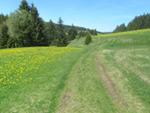 Heilklima-Steig
