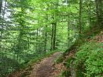 Todtmooser Lebküchlerweg