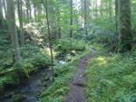 Wasser-, Wald- und Wiesenpfad