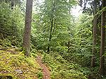 wildnis-trail-weiskirchen